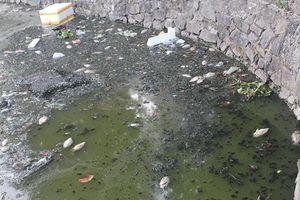 Đà Nẵng: Người dân bức xúc vì cá chết bốc mùi hôi thối