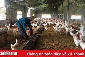 Nâng cao hiệu quả chăn nuôi nông hộ