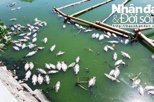 Đà Nẵng: Cá chết nổi lềnh bềnh trên hồ Thạc Gián – Vĩnh Trung