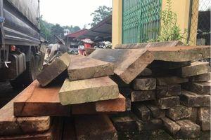Điều tra vụ phá rừng nghiến nghiêm trọng tại rừng phòng hộ ở Bắc Kạn