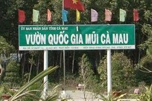Vườn Quốc gia Mũi Cà Mau lập quỹ trái phép hàng tỉ đồng