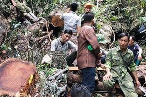 Phát hiện vụ phá rừng nghiêm trọng ở Bắc Kạn