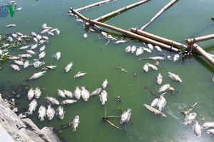 Cá chết trắng hồ Thạc Gián – Vĩnh Trung, Đà Nẵng
