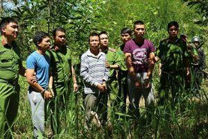Bắt thêm nghi can hạ độc 10ha rừng thông ở Lâm Đồng