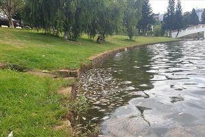 Cá chết bất thường, bốc mùi hôi thối ở hồ Bảo Lộc, Lâm Đồng