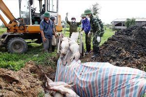 Chủ tịch tỉnh Ninh Bình chỉ đạo cấp 86 tỉ hỗ trợ hộ chăn nuôi lợn thiệt hại