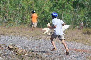 Hôi vịt trên xe tải ở Quảng Bình: Bao giờ người Việt mới hết thói hư tật xấu?