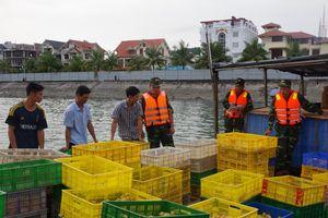 Quảng Ninh: Thu giữ gần 24.000 con gà, vịt giống nhập lậu