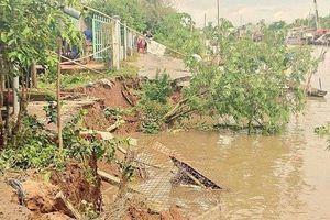An Giang tuyên bố tình trạng khẩn cấp về sạt lở tại TP.Long Xuyên