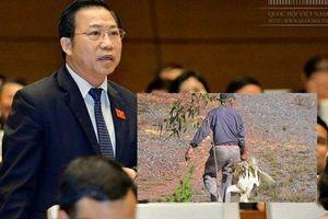 Ông Lưu Bình Nhưỡng: 'Hôi' vịt khi xe tải gặp nạn là phi đạo đức, không thể chấp nhận