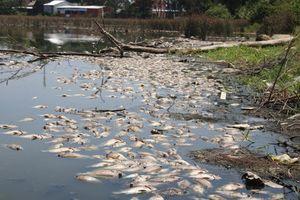 Quảng Ngãi: Cá chết trắng hồ không rõ nguyên nhân