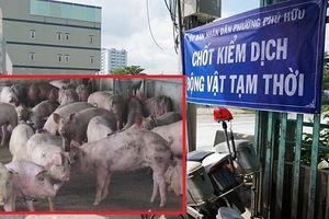 TP. Hồ Chí Minh: Nỗ lực chống dịch tả lợn châu Phi lây lan trên địa bàn