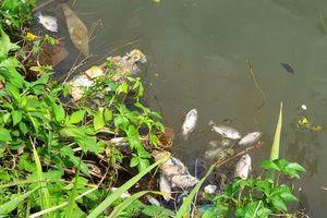 Lâm Đồng: Cá chết trắng tại hồ Đồng Nai thượng và Đồng Nai hạ