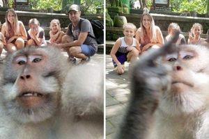 Bức ảnh khỉ 'selfie' cùng du khách ở Bali gây ấn tượng mạnh