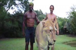 Dắt hổ lai sư tử khổng lồ đi dạo, to lớn như quái vật