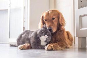 Sự thật 'sốc' người thích chó hạnh phúc hơn người thích mèo