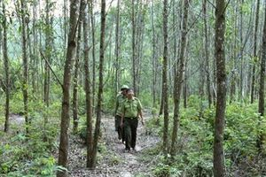 Đang tìm kiếm cán bộ kiểm lâm bị 'mất tích' nhiều ngày trong rừng