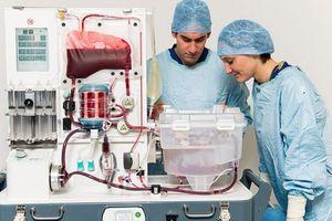 Phát minh mới giúp gan sống bên ngoài cơ thể được 24 giờ