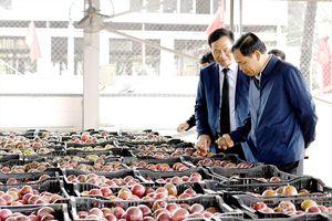 Xuất khẩu nông sản chính ngạch sang Trung Quốc: Không còn đường lùi
