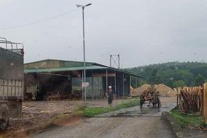 Hà Tĩnh: Cơ sở chế biến gỗ dăm trái phép ngang nhiên hoạt động trong khu dân cư