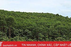 Huyện đầu tiên ở Hà Tĩnh phát triển rừng bền vững theo tiêu chuẩn FSC
