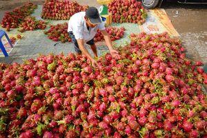 Tạo hướng vững chắc cho ngành trái cây Việt Nam
