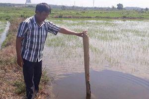 Thừa Thiên Huế: Đất ruộng vườn sụt lún, dân lo lắng