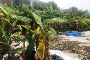 Đất vàng bỏ hoang hơn 20 năm (Hải Dương): Doanh nghiệp xin tái khởi động dự án