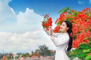 Ngắm hoa phượng đỏ Hải Phòng đẹp rực rỡ cả một vùng trời đất cảng