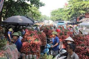 Gần 300 thương nhân Trung Quốc đã có mặt tại vựa vải thiều lớn nhất Việt Nam