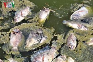 Cá chết trắng hồ ở Quảng Ngãi là do nắng nóng?