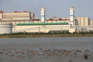 Formosa Hà Tĩnh phủ xanh 137 ha khuôn viên nhà máy