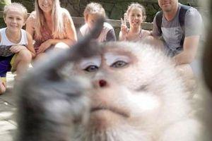 Đi nghỉ mát, gia đình được khỉ chụp 'tự sướng' ấn tượng như người