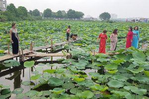 Quanh chuyện chụp ảnh ở hồ sen
