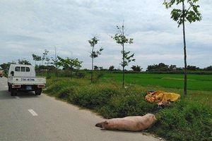 Truy tìm người vứt trộm xác lợn chết bên vệ đường giữa 'bão' dịch tả lợn châu Phi