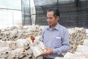 Sơn La: Tiền tỷ 'mọc' ra từ những cành củi khô