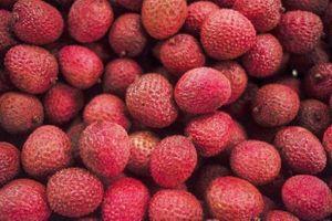 Gần 60 trẻ tử vong khi ăn quả vải lúc đói