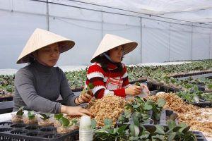Quảng Ninh: Phát huy các nguồn lực giảm nghèo bền vững