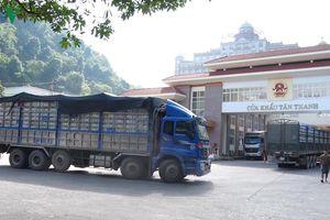 Xuất khẩu vải thiều tăng mạnh