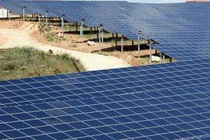 Công ty Limes Renewable Srl đề xuất đầu tư dự án điện mặt trời tại Kon Tum