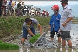 Máy cấy không động cơ giúp xử lý lúa lẫn