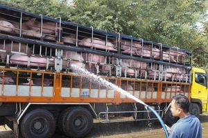 Quy định 'cấm vận chuyển lợn' đang làm khó nhiều doanh nghiệp chăn nuôi