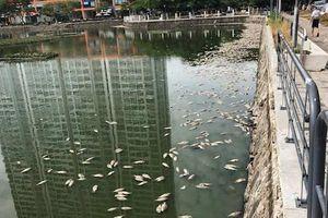 Nguyên nhân khiến hàng tấn cá chết trắng hồ ở Đà Nẵng
