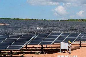 Khánh thành nhà máy điện mặt trời Phước Hữu-Điện lực 1 tại Ninh Thuận