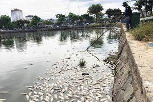 Hàng tấn cá tiếp tục chết nổi trắng hồ Thạc Gián: Sở TN-MT Đà Nẵng giải thích thế nào?