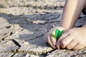 Thuận thiên là cách thích ứng tốt nhất với biến đổi khí hậu