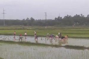 Giúp cụ ông cấy lúa, hơn 20 nữ công nhân may nhận 'mưa tim'
