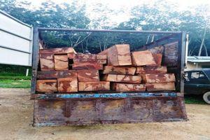 Bắt xe chở 46 hộp gỗ lậu