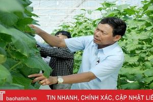 Mướt mắt vườn dưa lưới đạt chuẩn VietGAP đầu tiên ở Hà Tĩnh