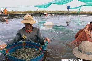 Thành lập Liên minh sản xuất tôm sạch và bền vững Việt Nam